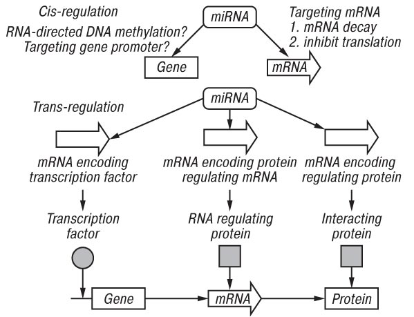 1110 MicroRNAs AND HUMAN CANCER