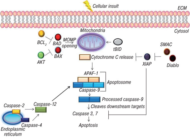 17 Caspase Control: Protagonists of Cancer Cell Apoptosis
