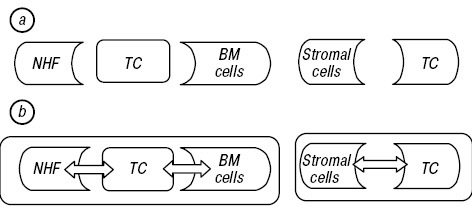 Impact of stromal cell components of tumor microenvironment on epithelial mesenchymal transition in breast cancer cells
