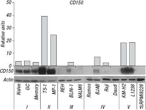Differential expression of CD150/SLAMF1 in normal and malignant B cells on the different stages of maturation