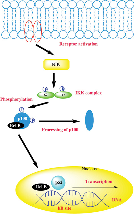 Insights into the mechanism of natural terpenoids as NF κB inhibitors: an overview on their anticancer potential