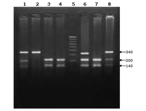 Impact of single nucleotide polymorphism in chemical metabolizing genes and exposure to wood smoke on risk of cervical cancer in North Indian women