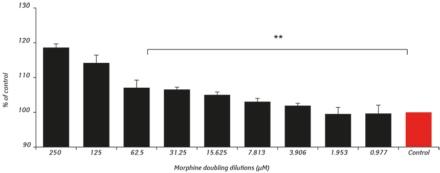 2465 fig1 The impact of morphine treatment on bladder cancer cell proliferation and apoptosis: <i>in vitro</i> studies