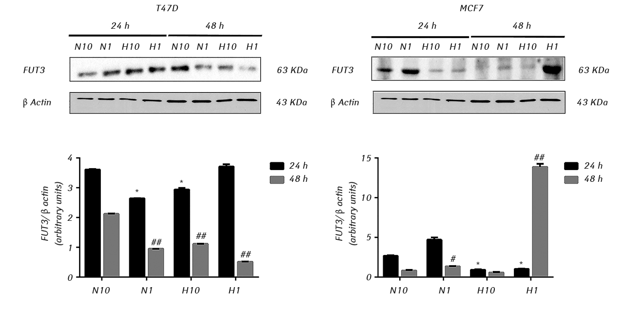 2510 Fig 2 1280 FUT3 expression in human breast cancer cells under hypoxia and serum deprivation