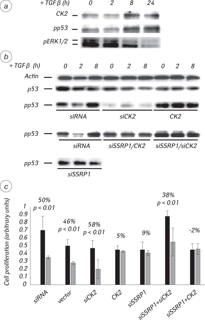 51 Proteomics of transforming growth factor β1 (TGF β1) signaling in 184A1 human breast epithelial cells suggests the involvement of casein kinase 2α in TGF β1 dependent p53 phosphorylation at Ser392