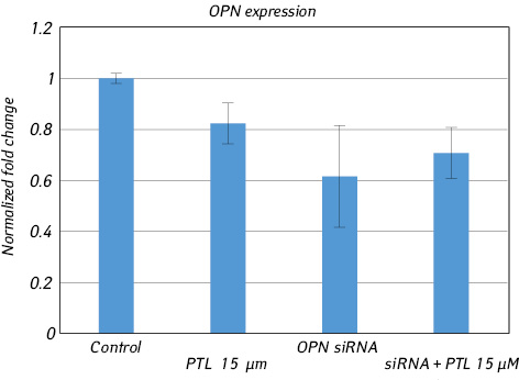 Osteopontin siRNA does not confer resistance to toxic effects of parthenolide in Jurkat cells