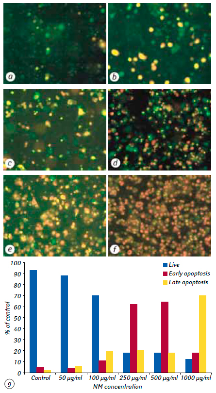 5 A nutrient mixture reduced tumor growth of SK UT 1 human leiomyosarcoma cells <i>in vivo</i> and <i>in vitro</i> by inhibiting MMPs and inducing apoptosis